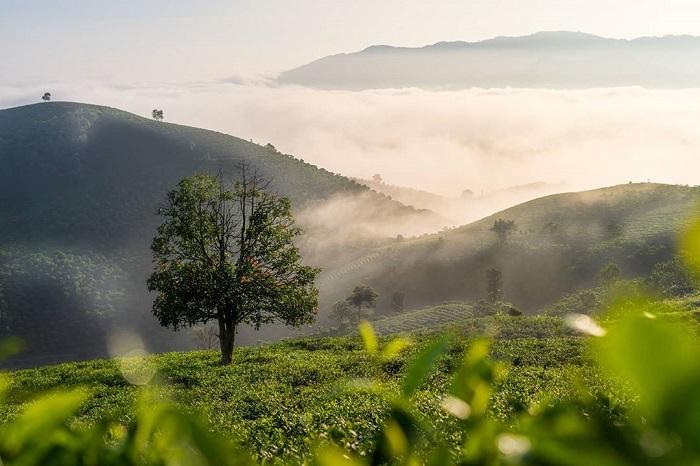 Kinh nghiệm du lịch Bảo Lộc Lâm Đồng chi tiết cho người mới